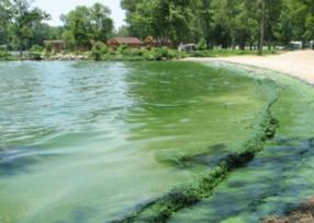 blue-green-algae-ctsy-lci